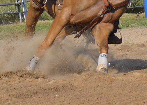 Your horse's legs are invaluable to his barrel racing career. Make sure to take care of them the best you can.