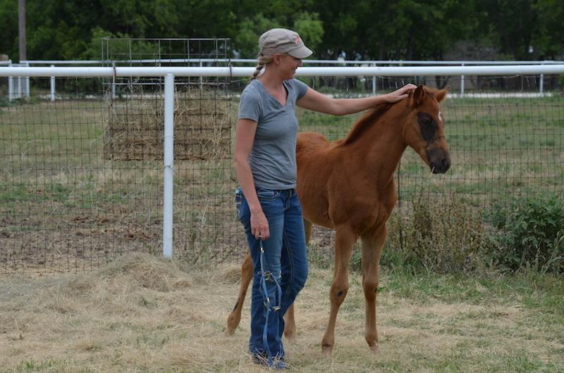 woman petting foal on head