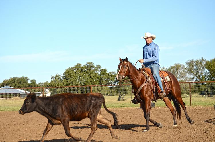 Jordon Briggs tracking a steer on horseback
