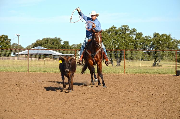 Justin Briggs roping steer off of horse