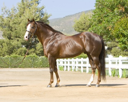 In stark contrast to his younger self, Dash Ta Fame photographed in 2010.