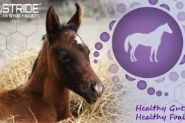Foal Paste FB 600x400 web 02