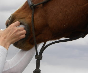 person inserting wormer into horse's mouth to prevent worms
