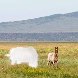 Little Orphan Annie: Raising an Orphan Foal