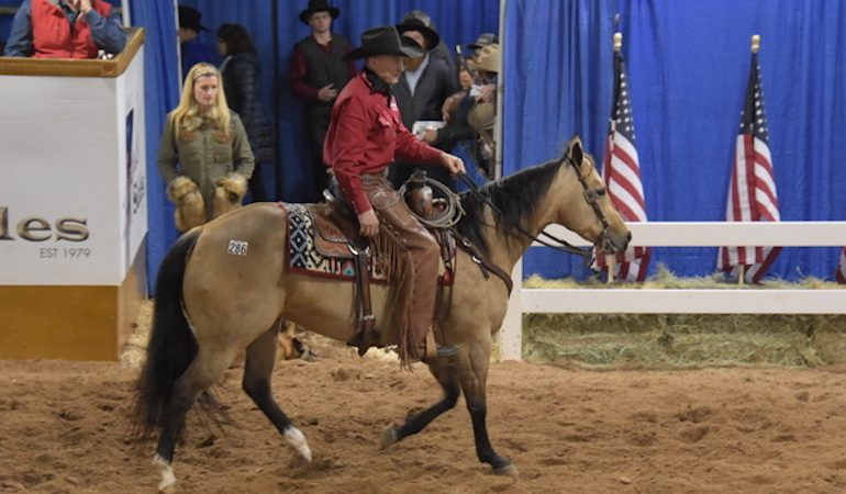 Jim Ware's Triangle Winter Sale horse in show ring
