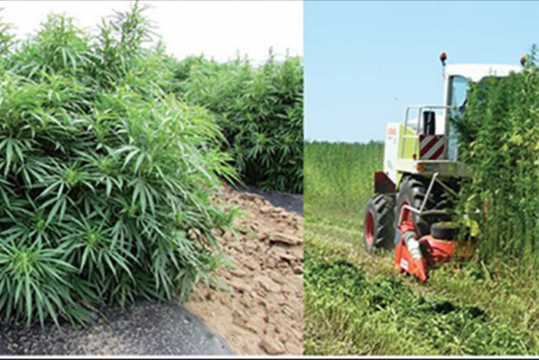CBD—What Is It and How Does It Work? - Barrel Horse News