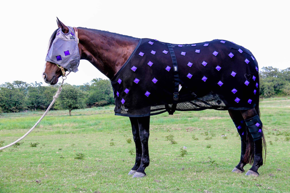 horse wearing a magnetic blanket