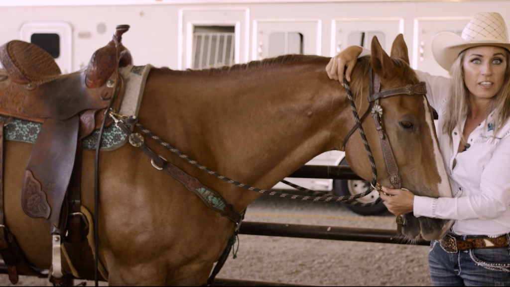 draw reins on horse