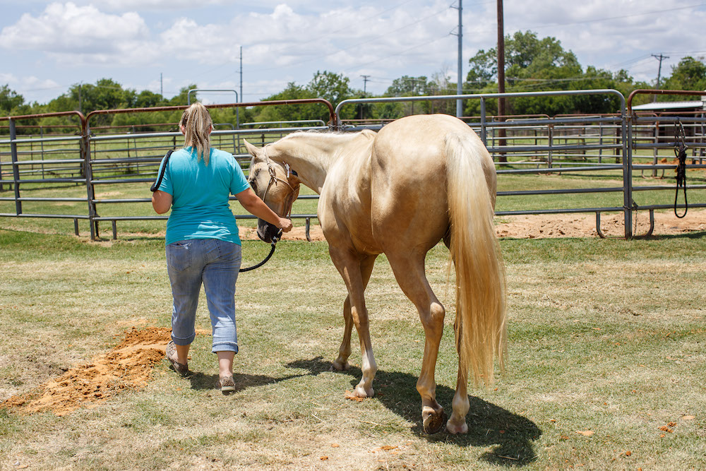 woman walking horse suffering from colic
