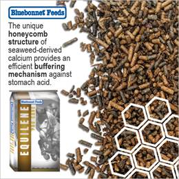 bluebonnet feed image that combats against leaky gut