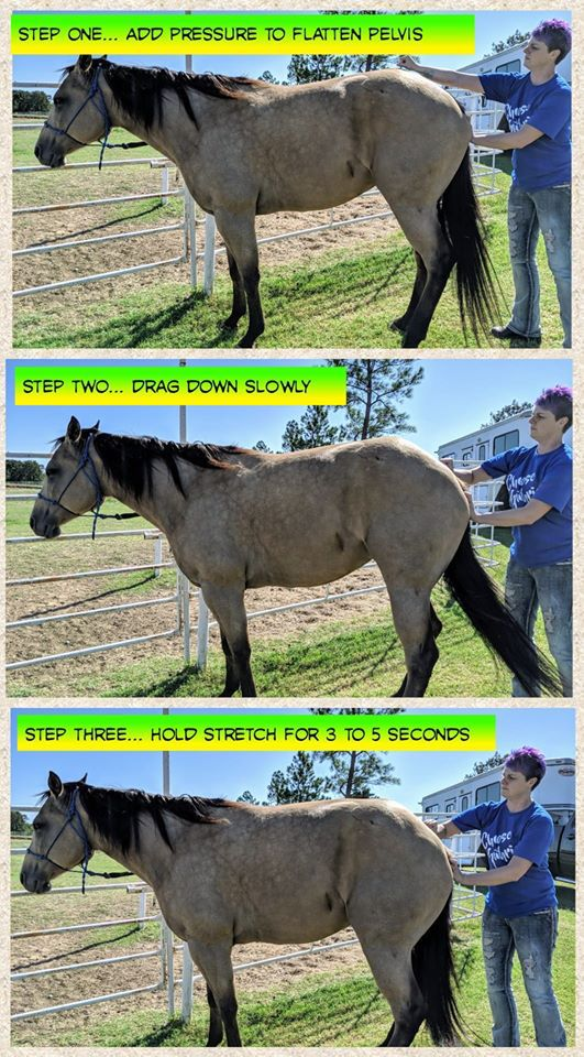 demonstration thumbnails on stretching a horse