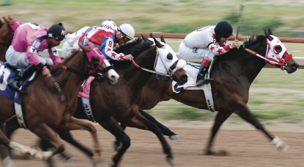racehorses running