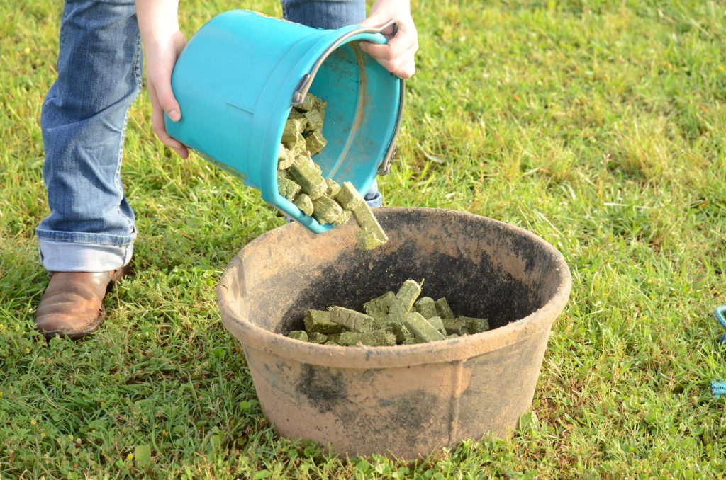 pouring alfalfa cubes from bucket into feed tub