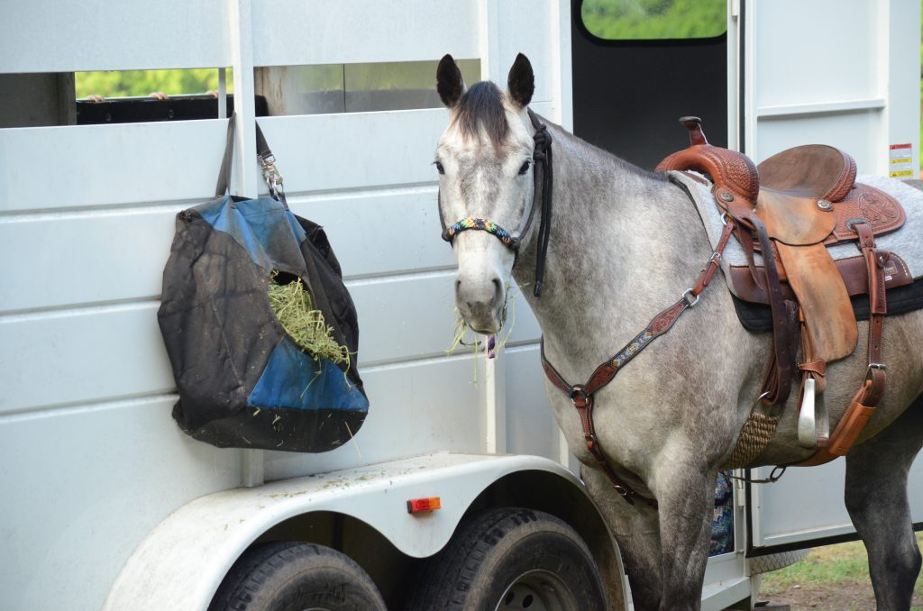 horse eating hay out of a bag at the trailer