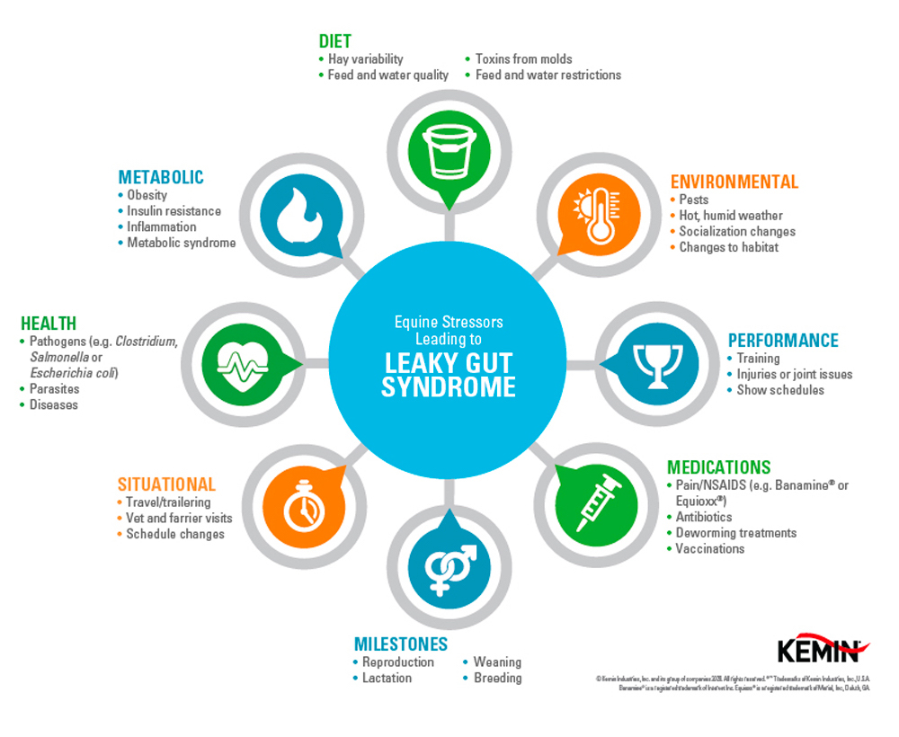 stressors leading to Leaky Gut Syndrome chart