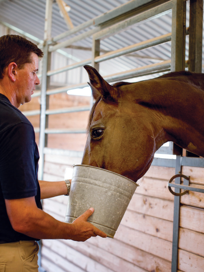 CBD is now being used by horse owners.