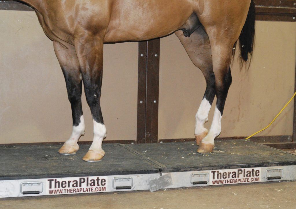 A horse receiving vibration therapy on a TheraPlate.