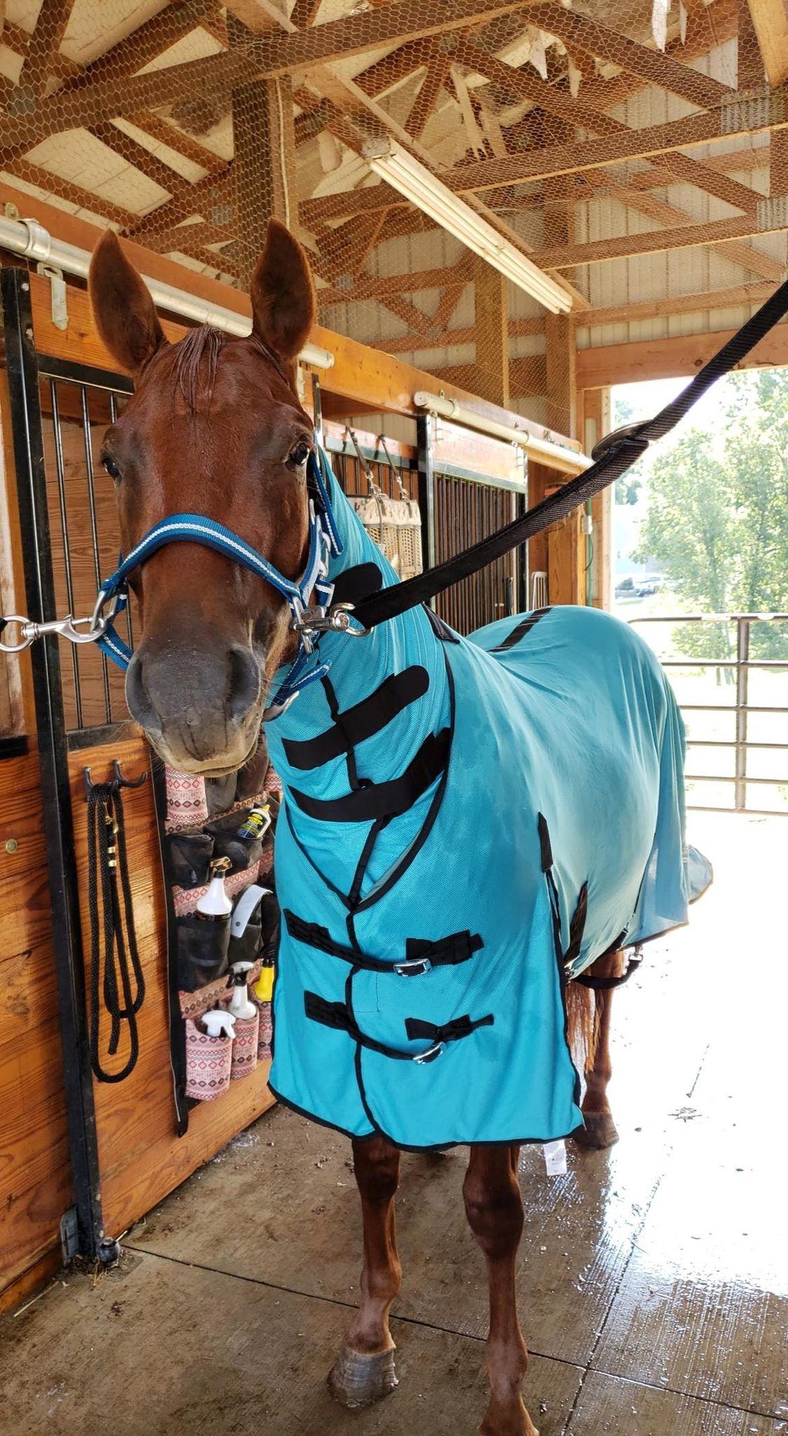 horse wearing equine cooling blanket after bath