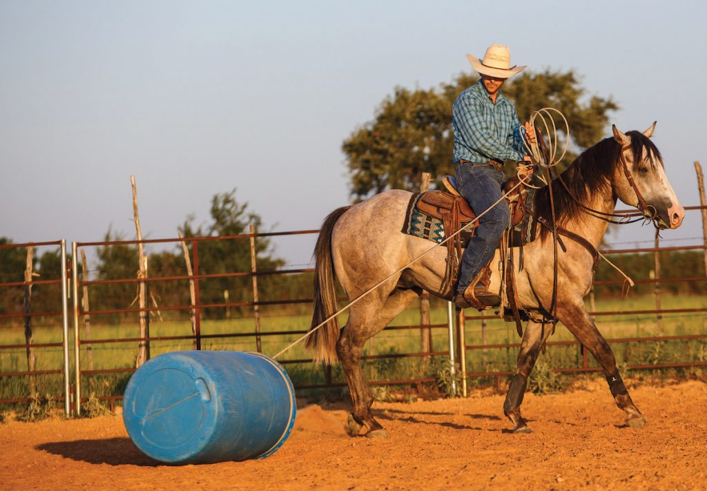 Working with a rope will help a young horse develop.