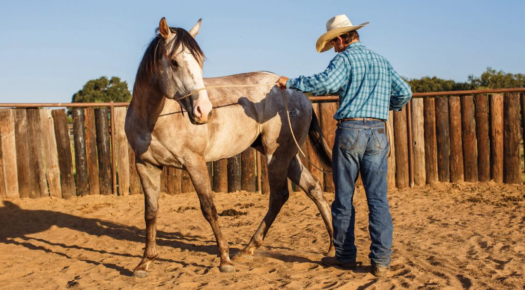 Ground work is important for any colt starting programs.