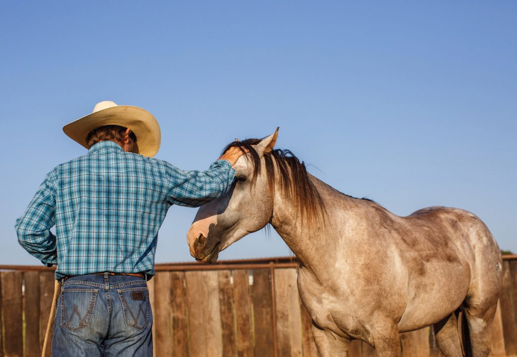 Look for a colt starter who enjoys working with young horses.
