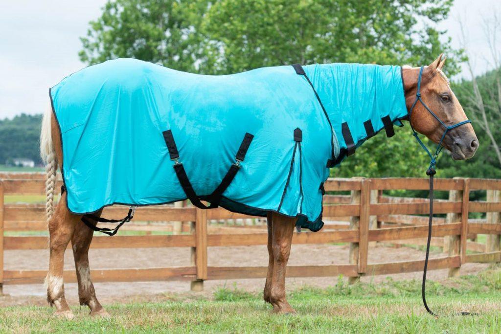 horse wearing equine cooling blanket