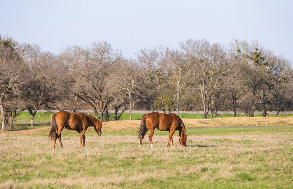 Two horses out on grass at the facility.
