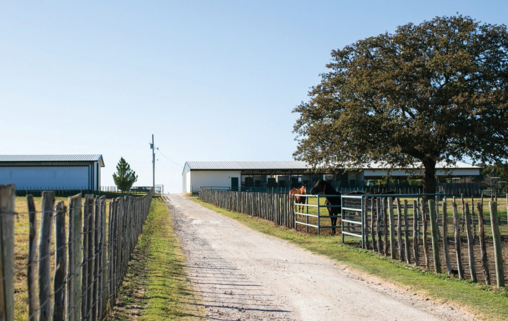 Housing stallions effectively includes laying out your facility to allow for room to roam.